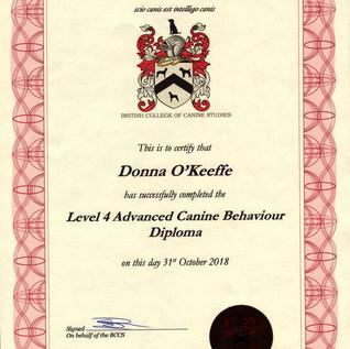 Level 4 Advanced Canine Behaviour Diplom