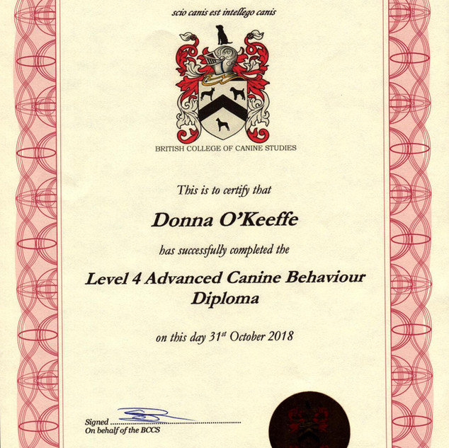 Level 4 Advanced Canine Behaviour Diplom