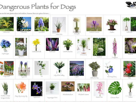 Dangerous Foods/Plants for Dogs
