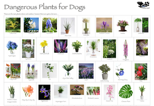 Dangerous Plants for Dogs