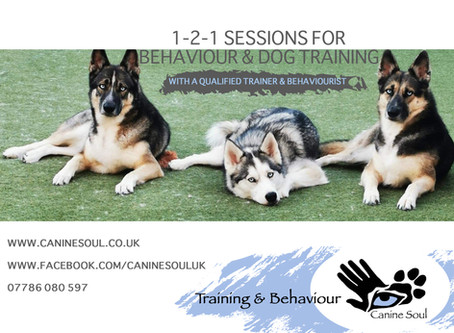 Who Needs Dog Training & Behaviour??