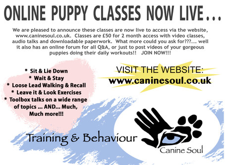 Puppies Classes Online now LIVE!!!