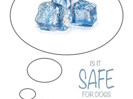 Is ICE Safe for your Dog...?
