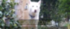 Screen Shot 2020-07-14 at 14.02.18.png