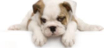 cute_puppy_photo_picture_9_168841.jpg