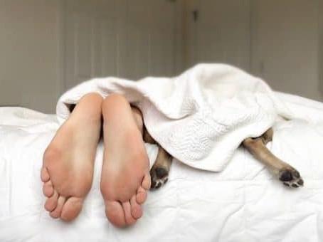 Dog's Bedtime Prayer