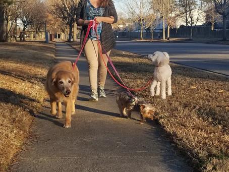 The Mental Stimulation a Mid-Day Dog Walk Provides