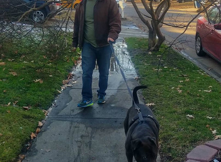 Our Thoughts on On-Demand Dog Walking and Pet Sitting