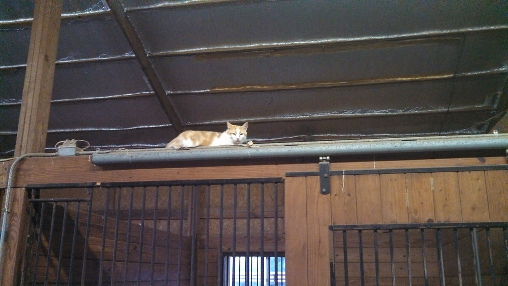 A barn cat sitting on top of a horse stall