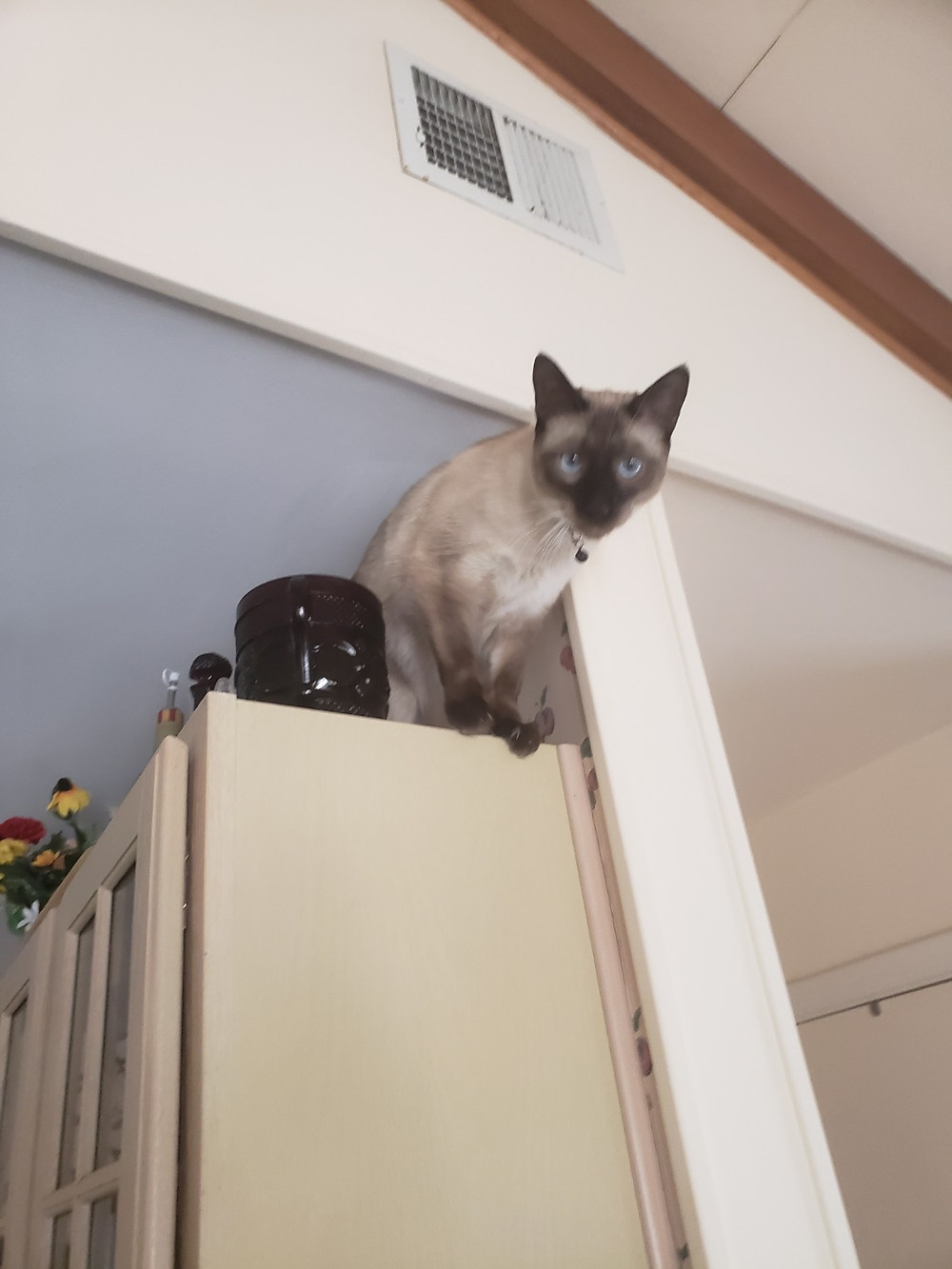 a cat sitting up high on cabinets