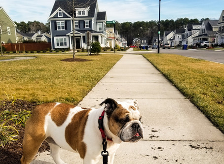 Top Moments as a Dog Walker: Surprised by Owners
