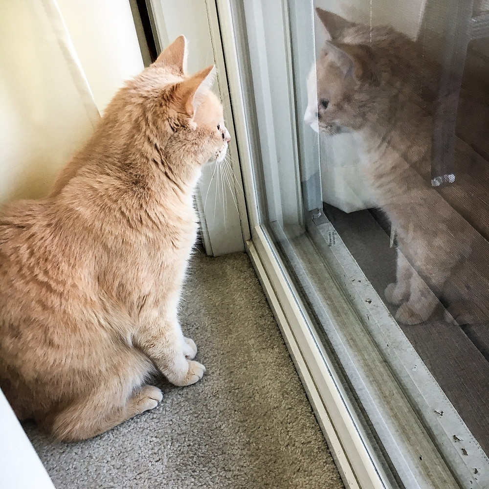 A cat sits and stares at its reflection