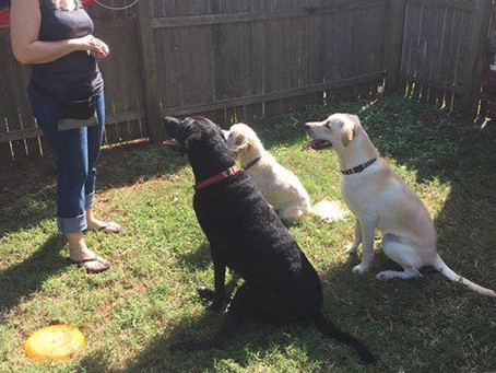 The Importance of a Meet and Greet: An Interview with Dog Trainer Andrea Singer