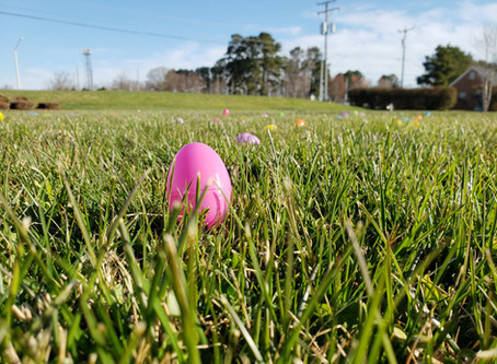 Reflections on the Doggy Easter Egg Hunt