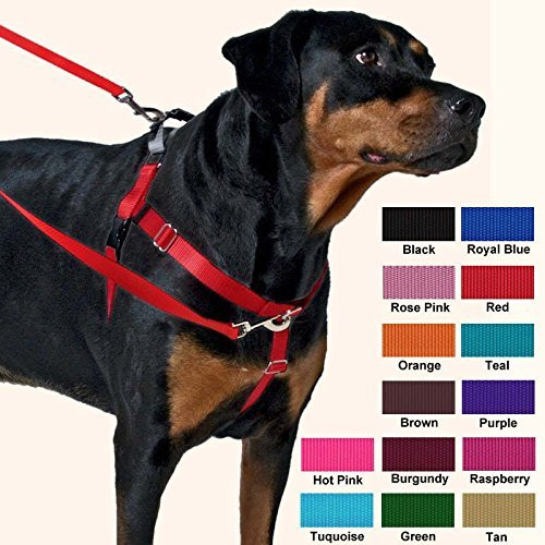 Freedom Harness for dog walking