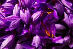 saffron-4562092_1920.jpg