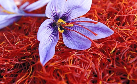 Safforn-Farming_edited.jpg
