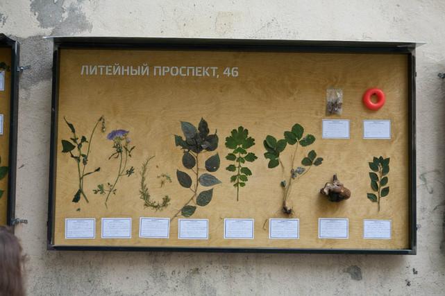 Alexander Morozov «Liteiny Prospect Herbarium» 
