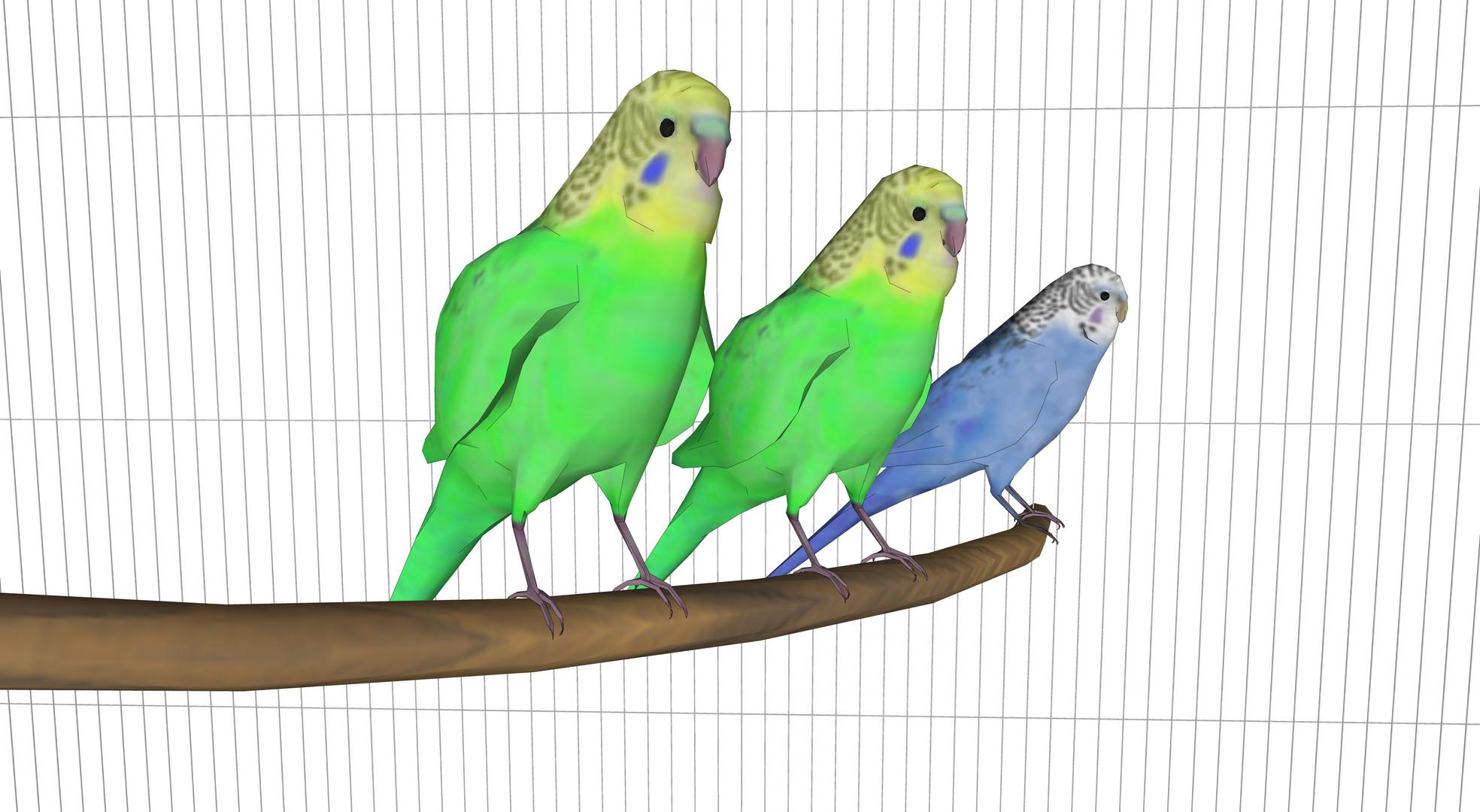 Shell-parakeet13-4.jpg