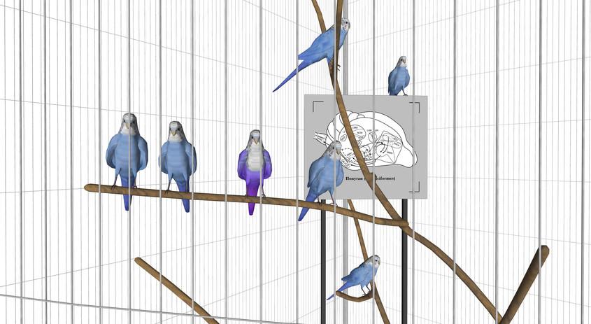 Shell-parakeet13-2.jpg
