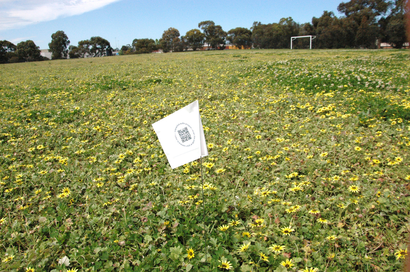 Darebin Field 2.jpg