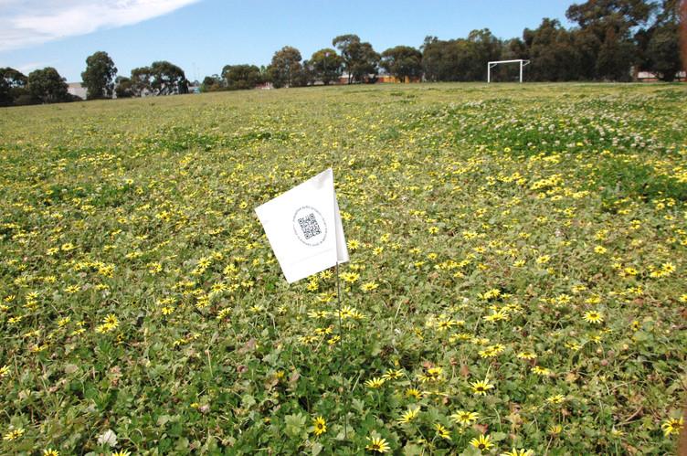 Darebin Field 2.jpg