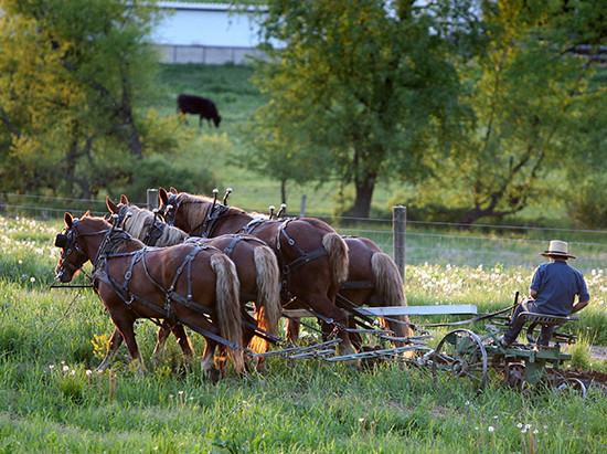 Common Amish Traditions Explained