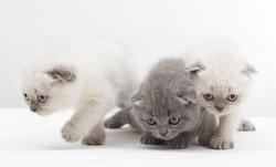 Biologisches Katzenstreu