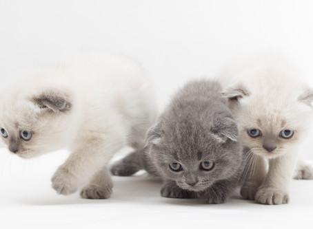 Katzen zusammenführen – die besten Tipps und Tricks