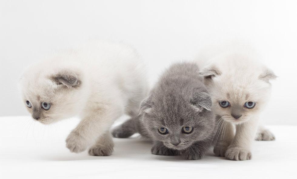 Katzen-Ernährungslehre