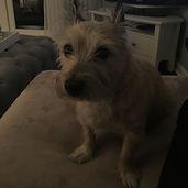 Dark photo - too dark - cairn terrier