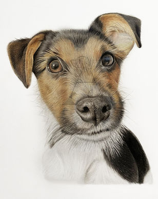 Baxter face watermark 1.jpg