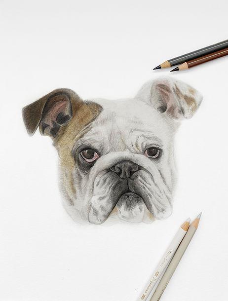 Bulldog JPG with pencils lighter.jpg