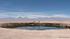 A l'assaut des lagunes chiliennes   désert d'Atacama-Chili