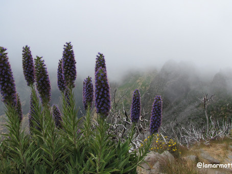 Pico Ruivo en Traversée | Madère