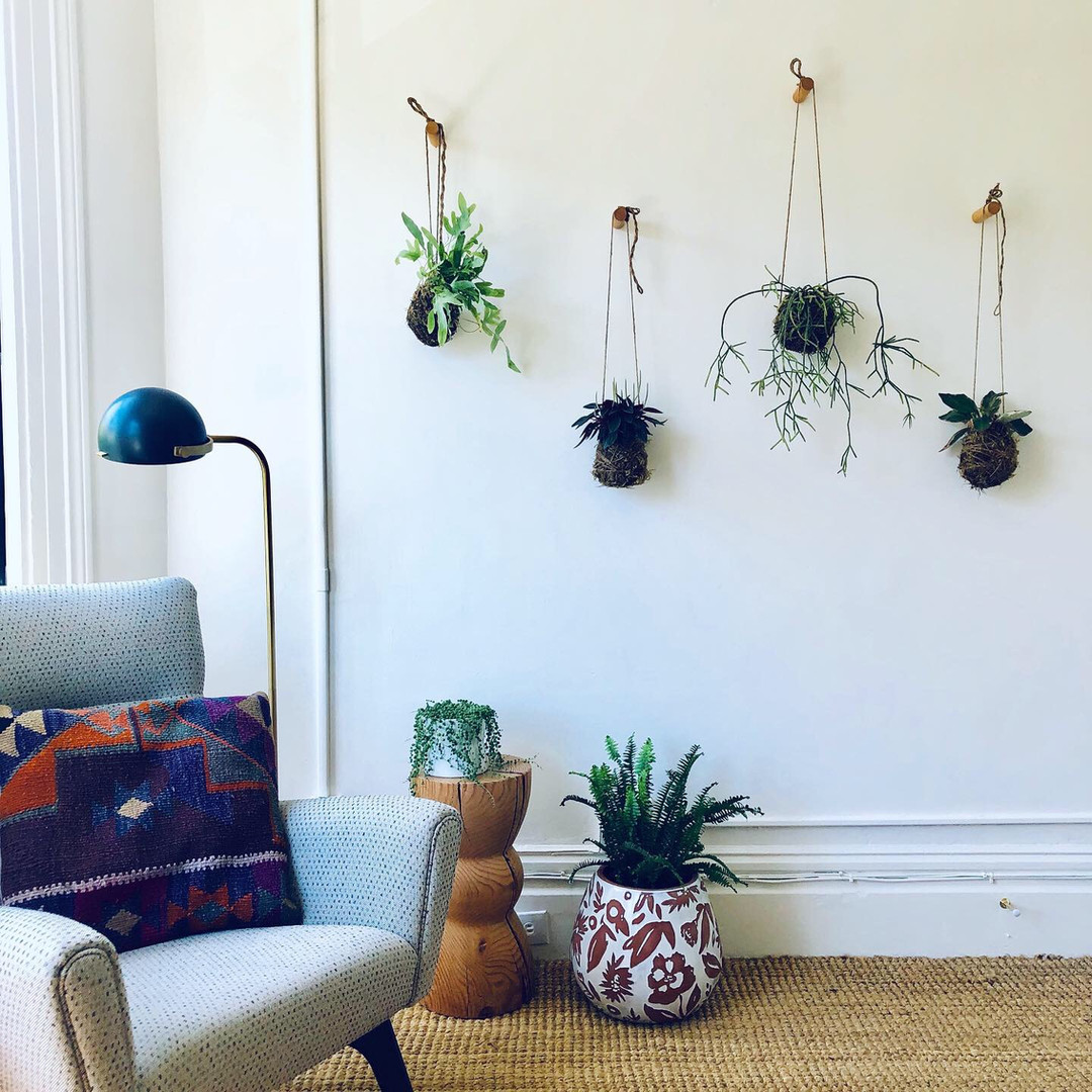 Kokedamas for home and office