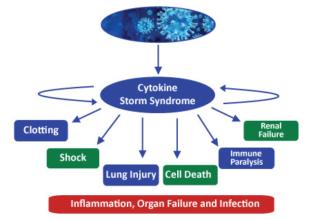 COVID- 19 and Cytokine Storm Syndrome