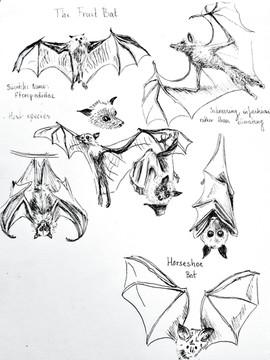 Bat sketches.jpeg