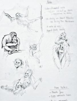 Organatan sketches.jpeg