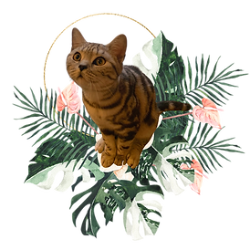 Seedling Spiritual Miss Cleo
