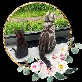 Seedling Spiritual | Cat Bbs