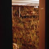 FAULTLINES-DOOR-IMAGE-LR.jpg