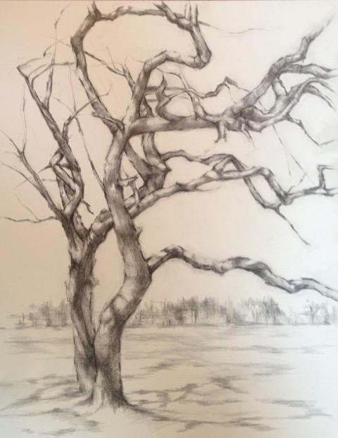 Tree in Waveny Park