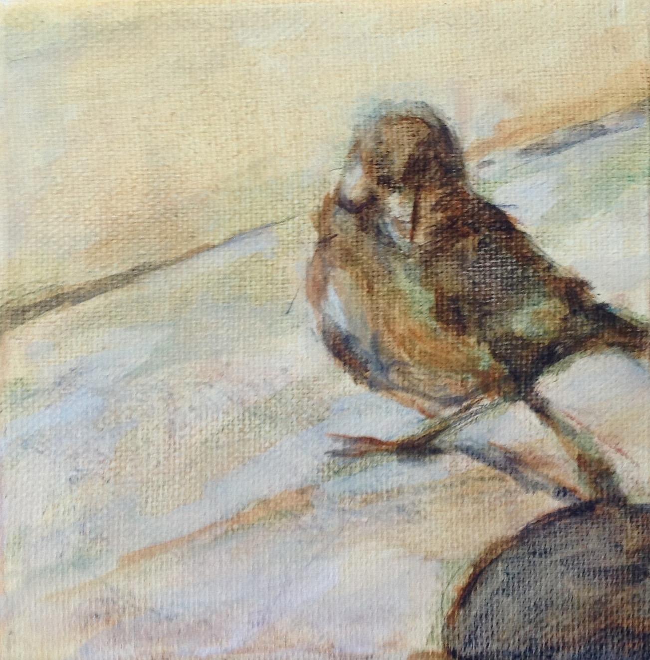 """Sparrow 1  (5""""x5"""")"""