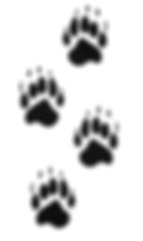 bear tracks.PNG