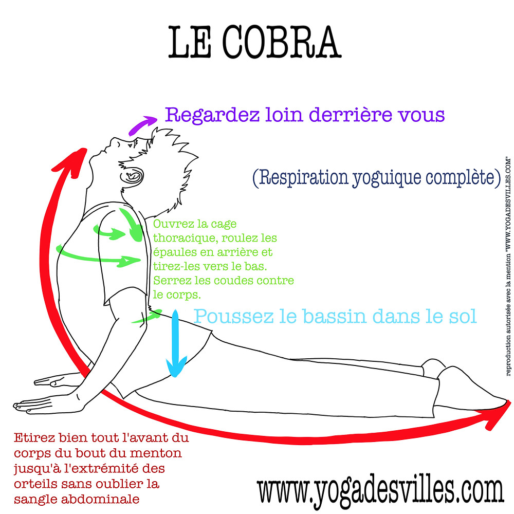 Yoga Le Cobra