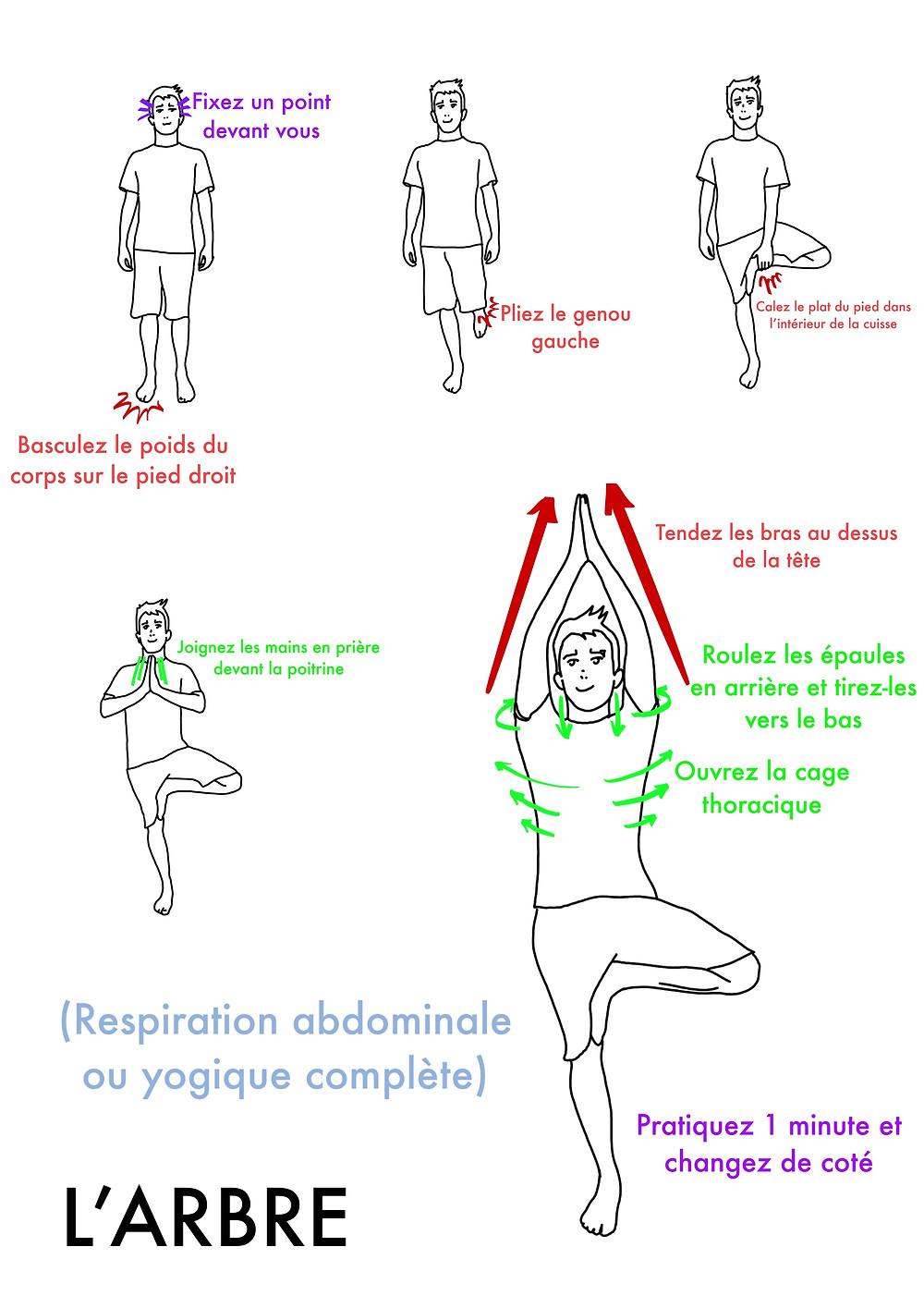Cours de Yoga en ligne : la posture de l'Arbre - www.yogawebacademie.fr