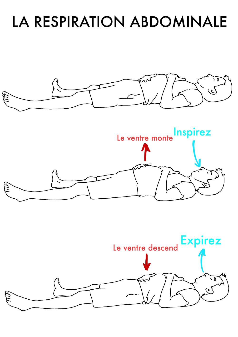Cours de Yoga en ligne : La Respiration Abdominale