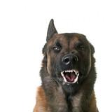 Dog-growling-1-e1495640733342.jpg