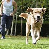 dog-run.jpg